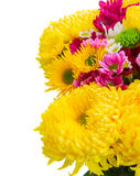 Yellow, red and pink  mum flowers Stock Images