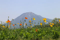 Yellow and red poppies against the backdrop of Mount Daisen, Japan. Tottori Hanakairo flower park Stock Photo