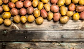 Yellow and red potatoes. On wooden background stock photos
