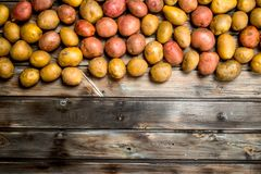 Yellow and red potatoes royalty free stock photo