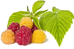 Yellow and red raspberries. Isolated on white background Stock Image