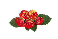 Yellow-red rose in the middle stacked on background Stock Images