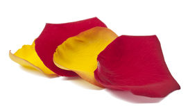 Yellow, red rose petals Stock Image