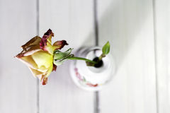 Yellow-Red rose in vase Royalty Free Stock Photo