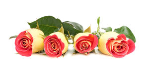 Yellow and red roses bouquet Stock Image