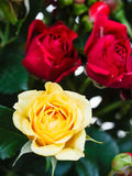 Yellow and red roses in bouquet of flowers Royalty Free Stock Photo