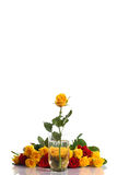 Yellow and red roses in a vase Stock Photography