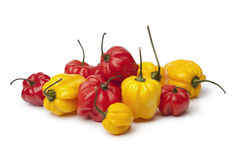 Yellow and red Scotch bonnet chili peppers Royalty Free Stock Images