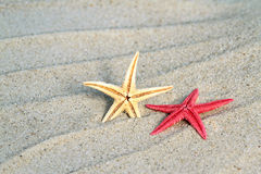 Yellow and red seastar on beach sand Royalty Free Stock Photos