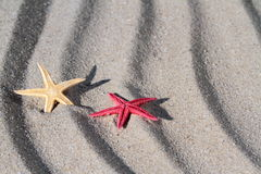 Yellow and red Seastars on beach sand Stock Photos