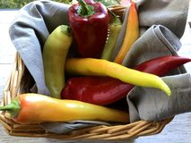 Yellow and red spicy chili peppers stock image