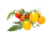 Yellow and red tomatoes Royalty Free Stock Images