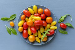 Yellow and red tomatoes and chicory leaves stock photography