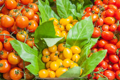 Yellow and red tomatoes on a shelf in market Royalty Free Stock Photography