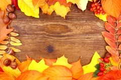 Yellow and red tree leaves on wood background. Close up Royalty Free Stock Image