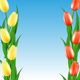 Yellow and red tulips. Against the sky Stock Image