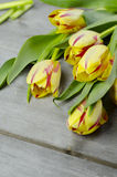 Yellow red tulips. Beautiful yellow red tulips on wooden background Stock Image