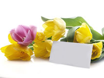 Yellow and red tulips with blank card for text Royalty Free Stock Image