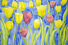 Yellow and red tulips on a blue background. Royalty Free Stock Image