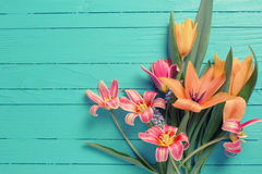 Yellow and red tulips flowers  on turquoise  painted wooden plan Stock Images