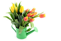 Yellow red tulips in water can vase Stock Images