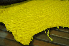 Yellow reptile leather Royalty Free Stock Image