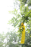 The Yellow Ribbon. Hang on the trees to show sorrowful to the death Royalty Free Stock Images