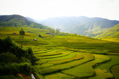 Yellow rice field in Mu Cang Chai, Vietnam stock photography