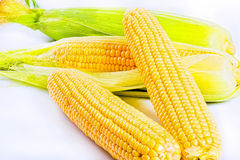 Yellow  ripe corn on cobs on white background Royalty Free Stock Photography