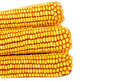 Yellow ripe corn collected in autumn Stock Photo