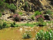 Yellow River royaltyfri foto