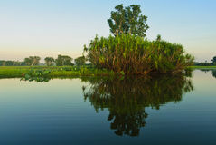 Yellow river billabong Stock Images