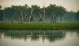 Yellow river billabong stock image