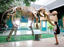 Yellow River Elephant Fossil. Show in Gansu Museum, Lanzhou, Gansu province of China.Visiting Gansu Provincial Museum is a must for every visitor coming to Stock Photos