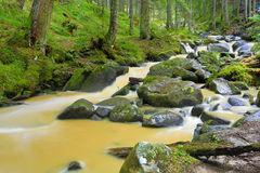 Yellow river in green forest Royalty Free Stock Images