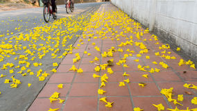 Yellow road Stock Image