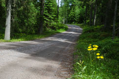 Yellow road side flowers Royalty Free Stock Image
