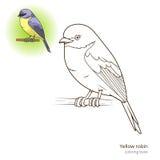 Yellow robin bird coloring book vector Stock Photo