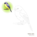 Yellow robin bird learn to draw vector Stock Images