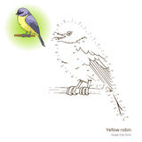 Yellow robin bird learn to draw vector. Yellow robin  learn birds educational game learn to draw vector illustration Stock Photography