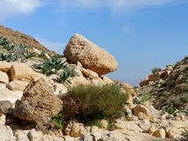 Yellow rock on the hill slope in desert in spring. Yellow rock on the hill slope in Negev desert in spring Royalty Free Stock Photography