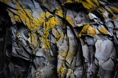 Yellow, Rock, Leaf, Tree Royalty Free Stock Images