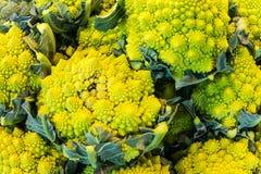 Yellow Romanesco Cauliflower Stock Photo