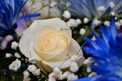 Yellow Rose με το καφετί υπόβαθρο στοκ εικόνες