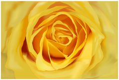 Yellow Rose. Very detailed close-up of yellow rose vector illustration