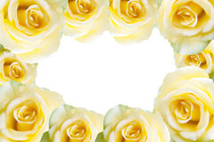 Yellow rose. Isolated on white background Royalty Free Stock Images