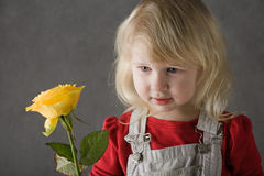 Yellow rose. Little blonde toddler girl with yellow rose in hands on grey background Royalty Free Stock Image