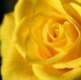 Yellow rose. Macro of a yellow rose Stock Photos