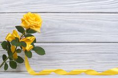 Yellow rose with a beautiful bow and a gold ribbon. On a wooden Stock Photos