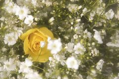 Yellow rose bouquet Stock Photography